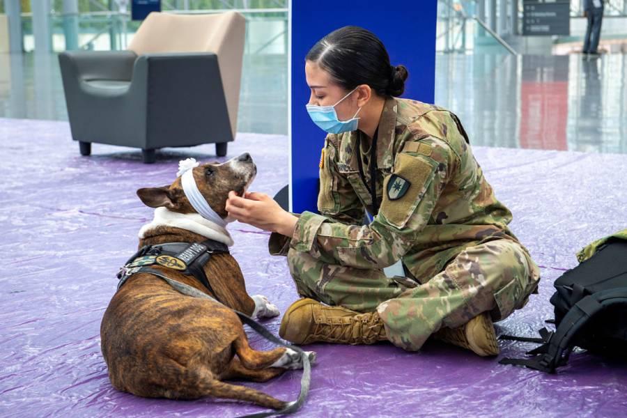 Investigará Reino Unido si los perros pueden detectar Covid-19