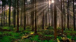 Contingencia sanitaria tuvo efectos contrastantes en los bosques: Conafor