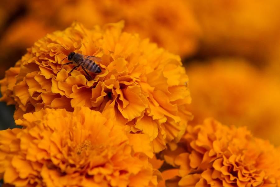 Las abejas garantizan el abasto de alimentos