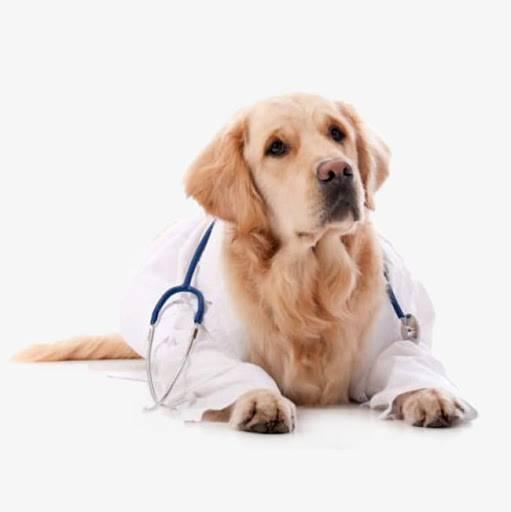 Purina cuidará mascotas del personal de salud