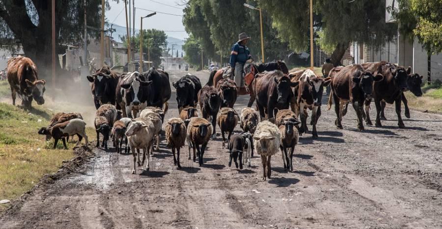 Ganaderos de Morelos en crisis por coronavirus