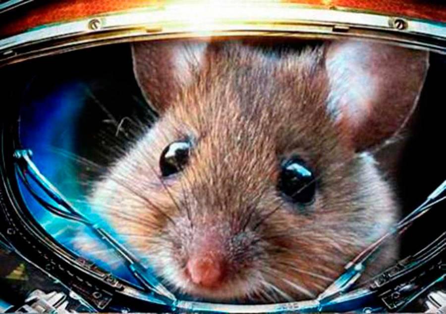 Rusia enviará ratones al espacio