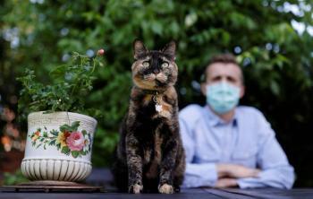 Una gata sobrevive a infección de coronavirus en París