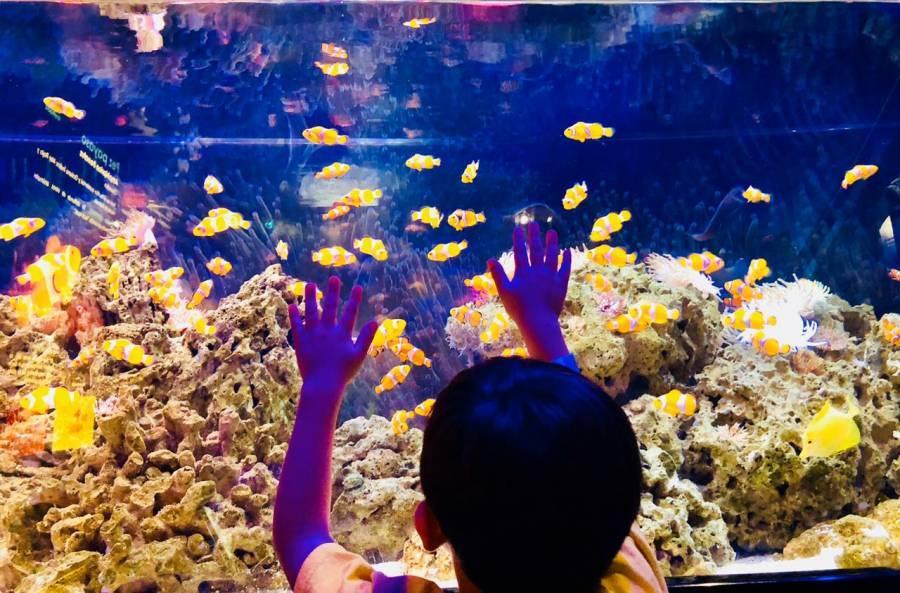 Estas serán las nuevas medidas para visitar zoológicos y acuarios: AZCARM