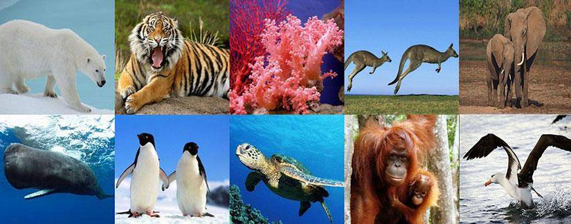 UNAM advierte sobre problemas de extinción