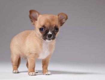 Impuesto sobre mascotas: Fake News