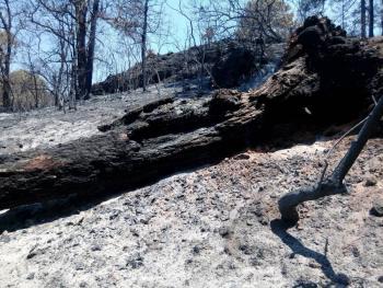 Denuncia Profepa a joven ante FGR por incendio en el Tepozteco