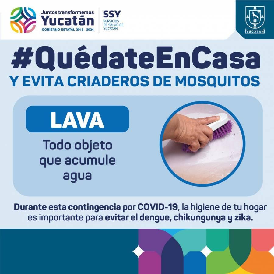 Yucatán: Plaga de mosco negro causa encefalitis
