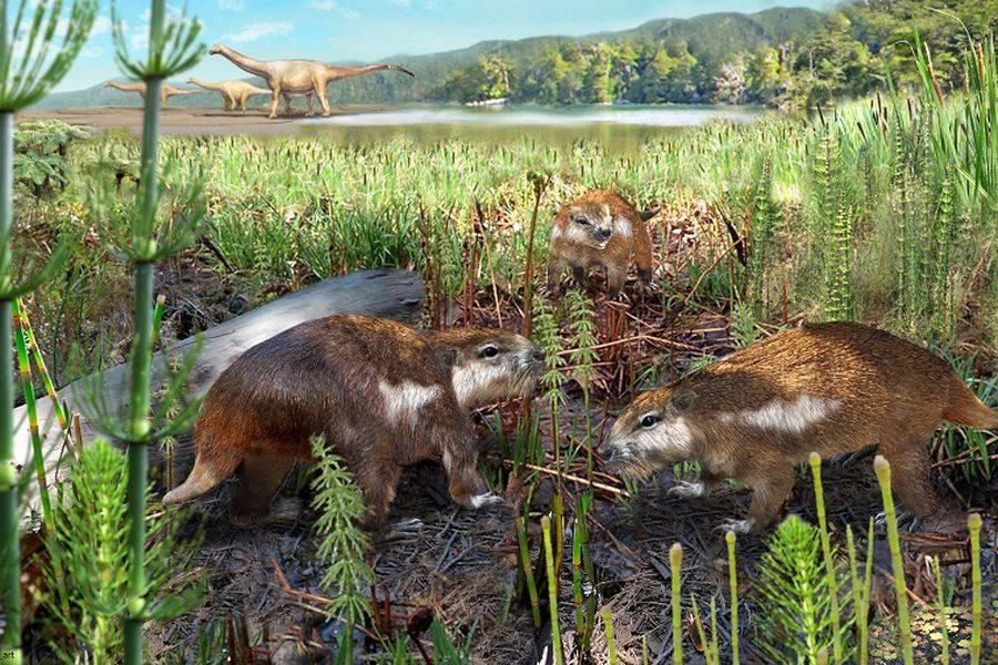Descubren fósil mamífero más antiguo de Chile