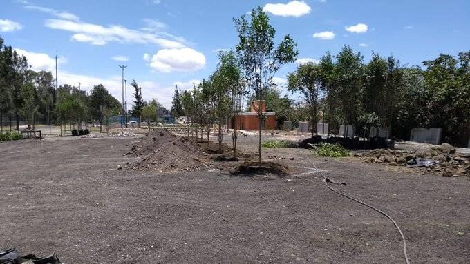 Arranca el programa de reforestación de la CDMX