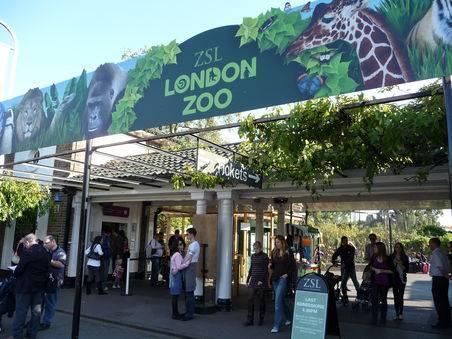 Zoológico de Londres reabre al público tras casi tres meses sin visitas, pero con restricciones
