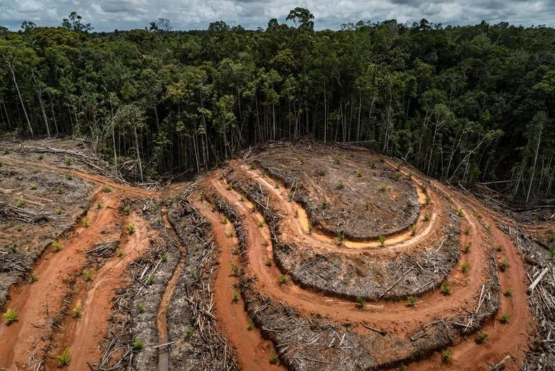 Brasil, Bolivia, Perú, Colombia y México países con más deforestación