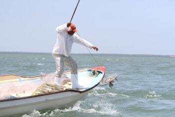 Pesca de jaiba salva litoral de Sonara y Sinaloa en la contingencia