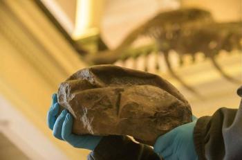 Nuevo gigante, el fósil de huevo más grande de dinosaurio ha sido descubierto