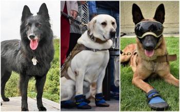 CNPC invita a menores a concurso de dibujo sobre perros rescatistas