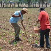 Reporta Agricultura avance del 56% en la entrega de fertilizantes en Guerrero