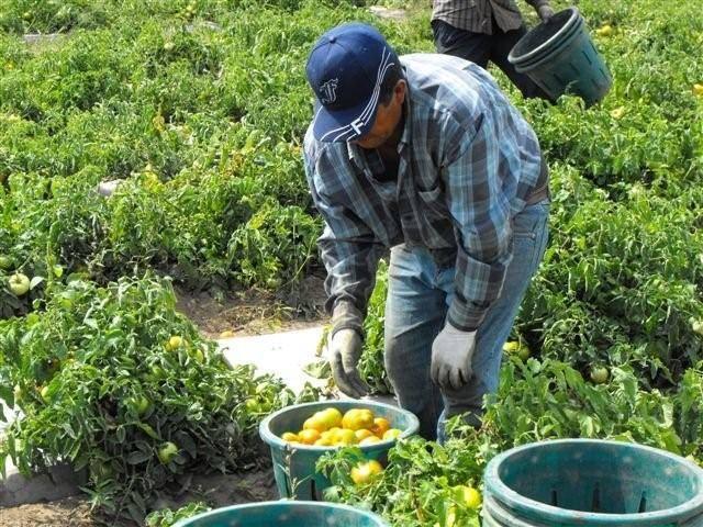 Muere por COVID-19 tercer trabajador mexicano en Canadá