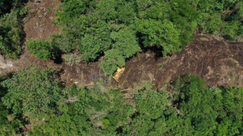 Piden detener deforestación en Playa del Carmen