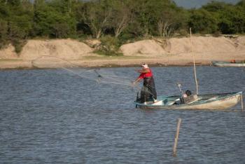 Siembra Conapesca un millón de crías de tilapia en la presa el Comedero
