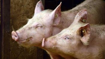 Gripe porcina G4 no es nueva y no infecta a humanos fácilmente, aclara China