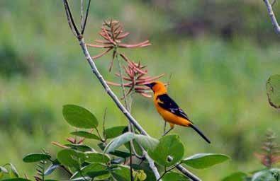 No se detiene la traducción del Catalogo Hñahñu de especies endémicas