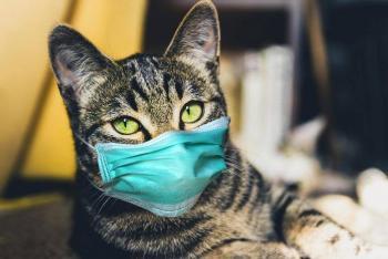 Cómo cuidar de tus mascotas en tiempo de cuarentena