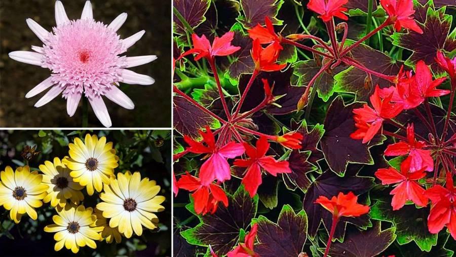 Aparición de las plantas con flor cambió la faz de la tierra, revela estudio de la UNAM