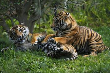 Los animales no transmiten Covid-19: UNAM