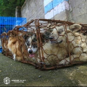 Tráfico de animales fomenta enfermedades infecciosas: ONU