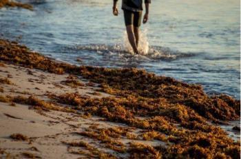 IPN analizará incremento del sargazo en el Caribe de México