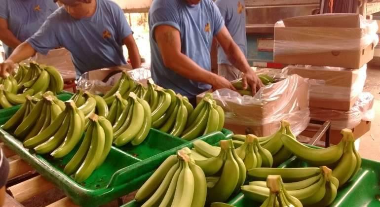 Inspecciona Sader más de 500 mil cargamentos agropecuarios para disminuir riesgo