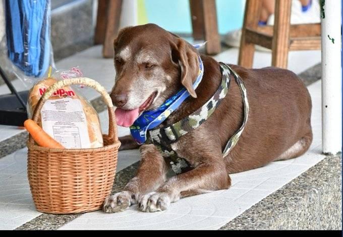 Asaltan a perrito repartidor de comida