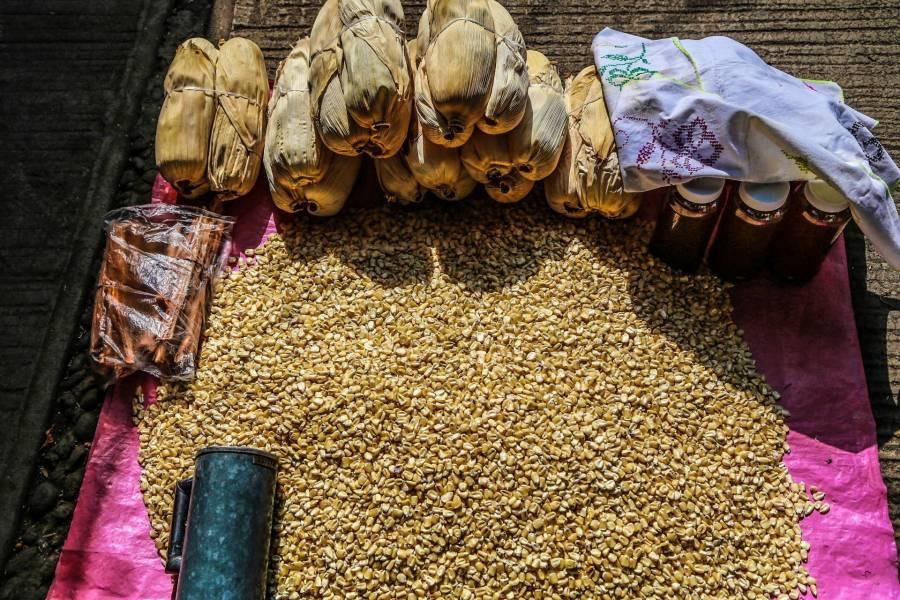 Maseca producirá maíz sustentable junto al Inifap