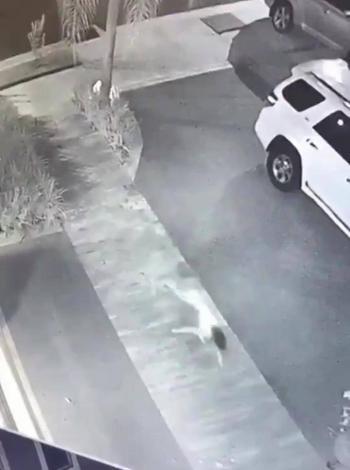 """Video: Reaparece la """"Niña perro de Tamaulipas"""""""