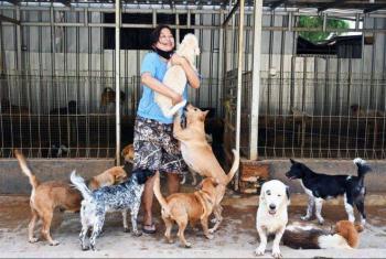 Más de mil perros fueron rescatados por una mujer en Indonesia