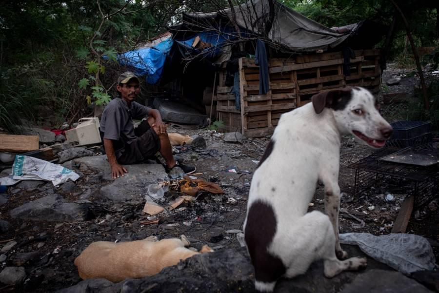 ¡Día Mundial del Perro! 80 por ciento son callejeros en México