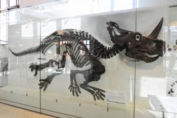Localizan por primera vez cáncer de hueso en fósil de dinosaurio