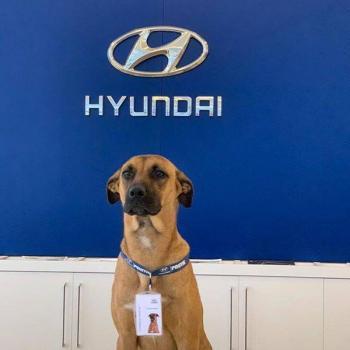 Perrito callejero encuentra empleo en agencia de autos