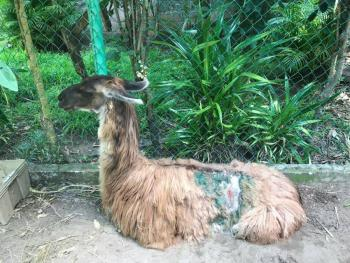 AZCARM pide a Gobierno de Veracruz atender a animales del zoológico Miguel A. de Quevedo