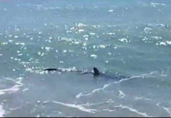 ¡Aguas! Ya habría tiburones en Los Cabos