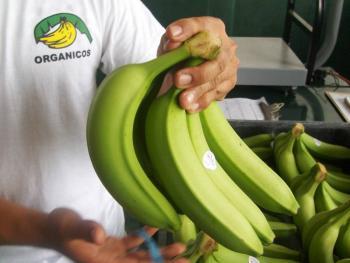 Logran certificación 1,170 productos orgánicos mexicanos