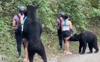 Denunciará diputada del PAN castración del oso negro de Monterrey