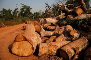 La deforestación, una posible causa para la aparición de nuevas pandemias