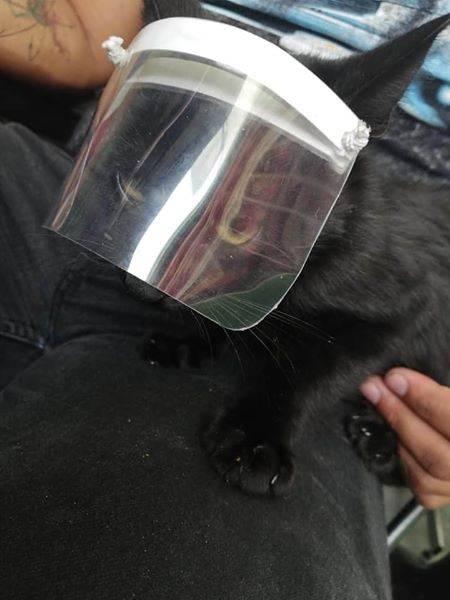 Ya hay caretas para gatos por Covid-19