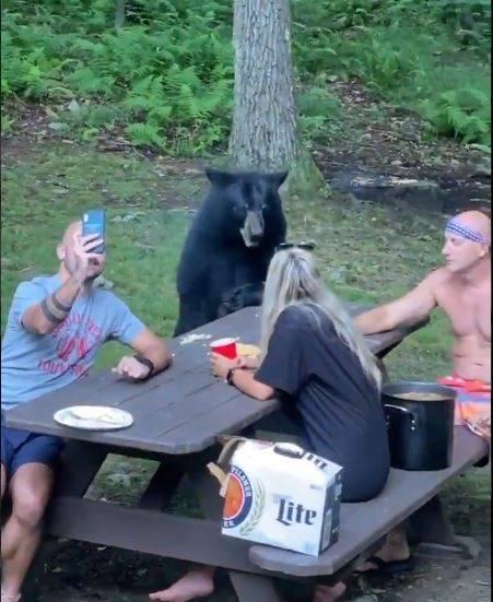 "Captan a un ""amigable"" oso uniéndose al picnic de una familia"