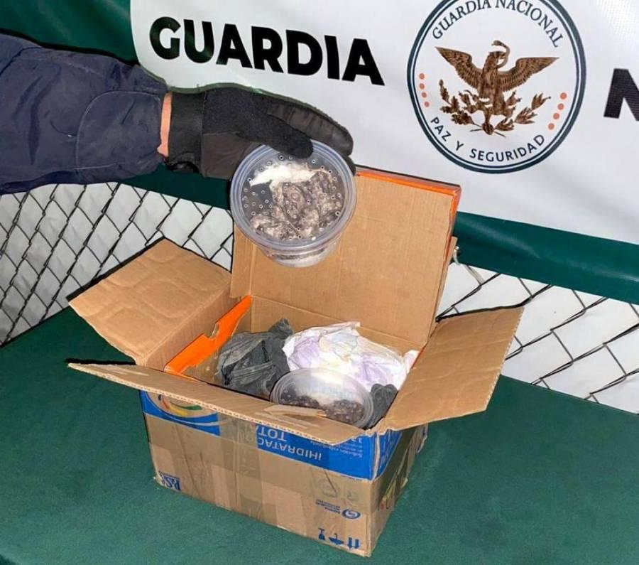 GN intercepta envío de especies protegidas que viajaban de Yucatan a Monterrey