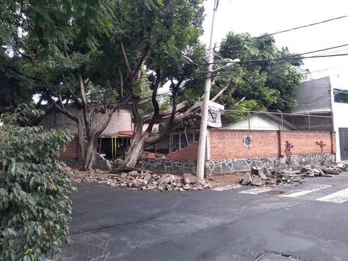 Árbol de 15 metros cae sobre casa en Coyoacán