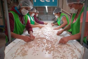 """Contribuirá """"Producción para el Bienestar"""" a incrementar disponibilidad de granos"""