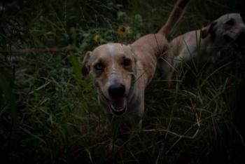 Vinculan a proceso a sujeto que mató a un perrito en Nezahualcóyotl