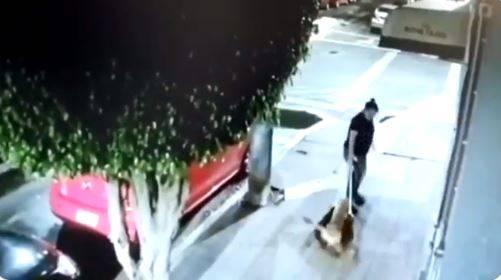 Mujer abandona a tres perritos en veterinaria en CDMX